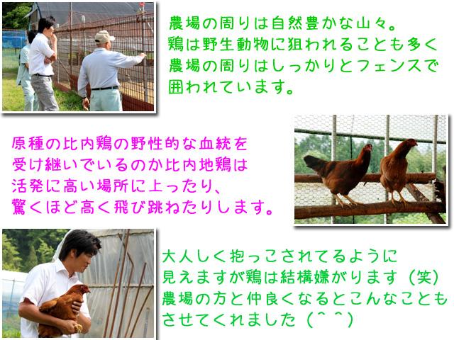 大館市比内町の比内地鶏農場3