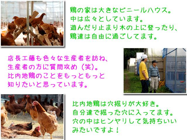 自慢の比内地鶏農場